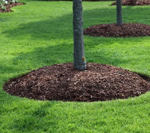 general purpose woodland mulch