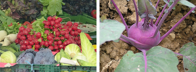 no dig method of growing veg image
